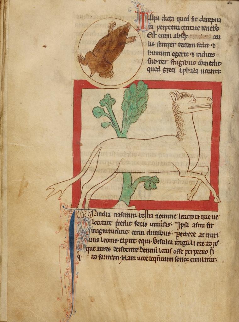 Northumberland_Bestiary_-_A_Mole;_A_Leucrota_(f33v)